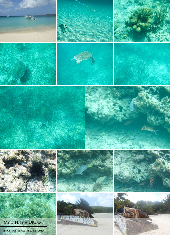 Snorkeling in Isla Culebra